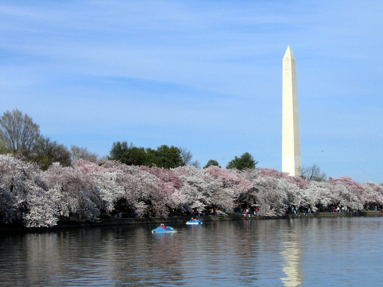 washington monument closed through cherry blossom festival article
