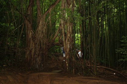 Banyan Tunnel